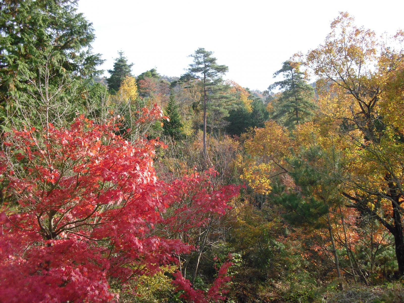 高取山は紅葉のピーク! © 高取山ふれあい公園
